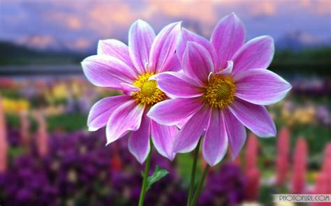 Flower Animation Wallpaper - animated flower wallpapers free wallpapers