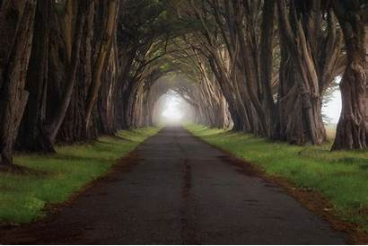 Landscape Road Trees Backgrounds Wallpapers
