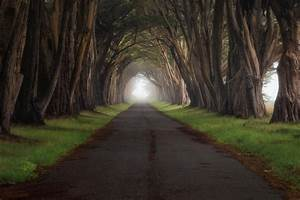 Landscape, Trees, Road, Wallpapers, Hd, Desktop, And, Mobile, Backgrounds