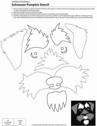 Pumpkin Stencil Dog Stencils Breed Schnauzer Carving