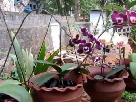 orchid garden youtube