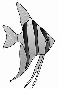 Angel Fish Clip Art - ClipArt Best