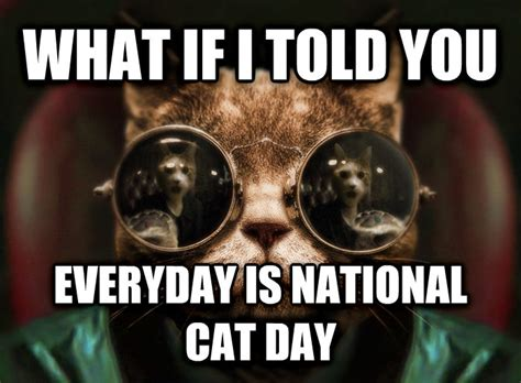 Morpheus Cat Meme - livememe com morpheus cat facts