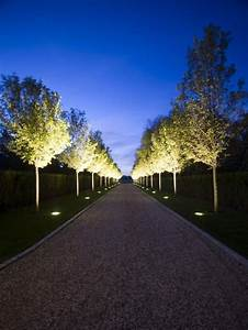 simple floodlights shining upward on tree canopy makes a With outdoor lighting tree canopy