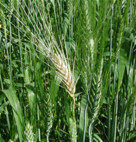 crop  pest report entomology
