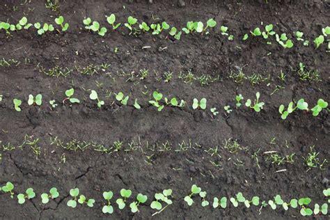 Praxis Boden Feucht Halten by Mischkultur Welche Pflanzen Passen Ideal Zusammen Plantura