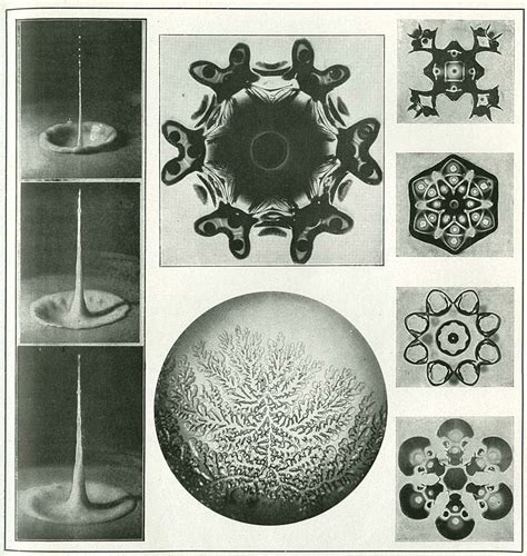 theory organic shapes ernst haeckels art forms