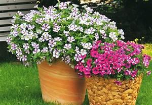 Blumen Und Ihre Bedeutung : wissenswertes ber blumen ihren nutzen und ihre bedeutung bei obi ~ Frokenaadalensverden.com Haus und Dekorationen