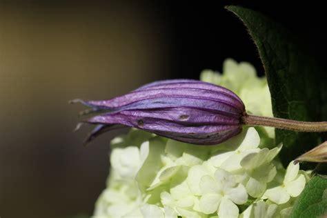 fiore viola fiore viola foto immagini piante fiori e funghi