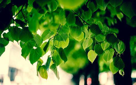 green tree images hd hd desktop wallpapers 4k hd