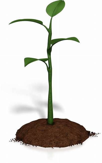 Plant Clipart Growing Animated Soil Growth Clipground