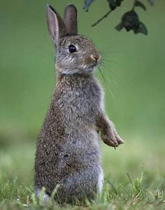 ROY HATTERSLEY: Rabbit pie? Give me Bugs Bunny any day ...