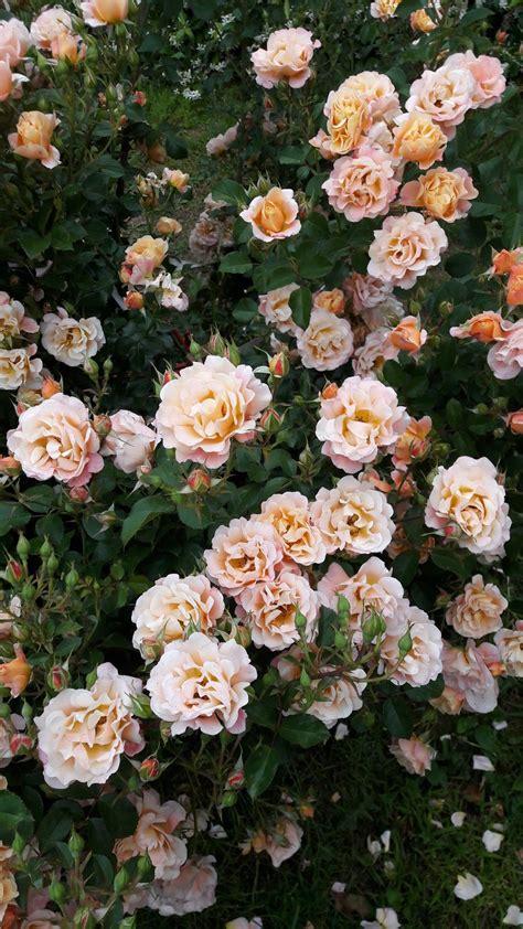 Aesthetic Flower Wallpapers Top Free Aesthetic Flower