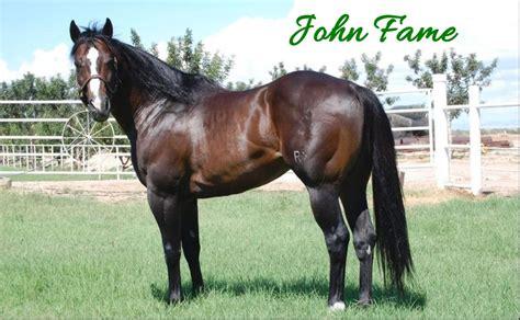future stallions fortunes horse