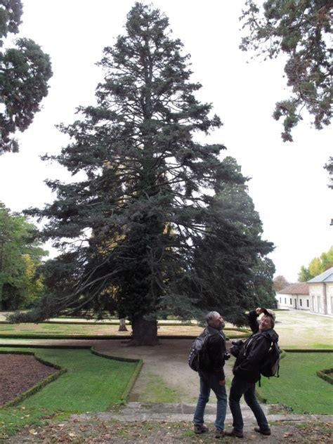 Der Garten Auf Spanisch by Spanische Tannen Im Garten Der Palacio Real De La Granja