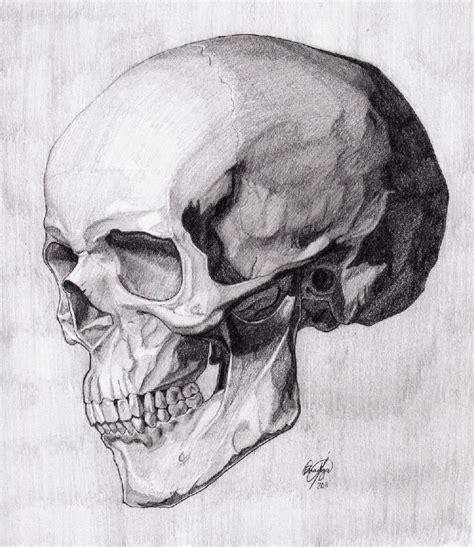 Skull Three Quarter Reverse Critique Art Skeleton