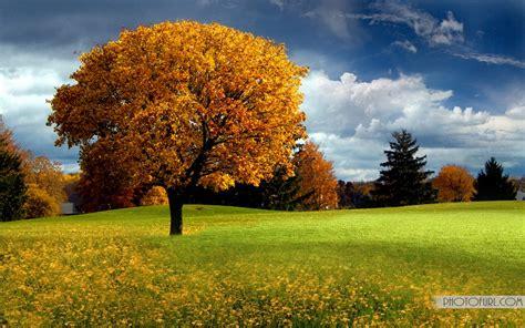 Beautiful Tree Wallpaper For Desktop by Beautiful Trees And Nature Wallpapers Hd Free Wallpapers