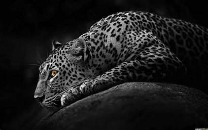 Windows Wallpapers Hp Dark 1080p Jaguar