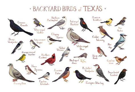 Backyard Identification by Backyard Birds Field Guide Print Watercolor