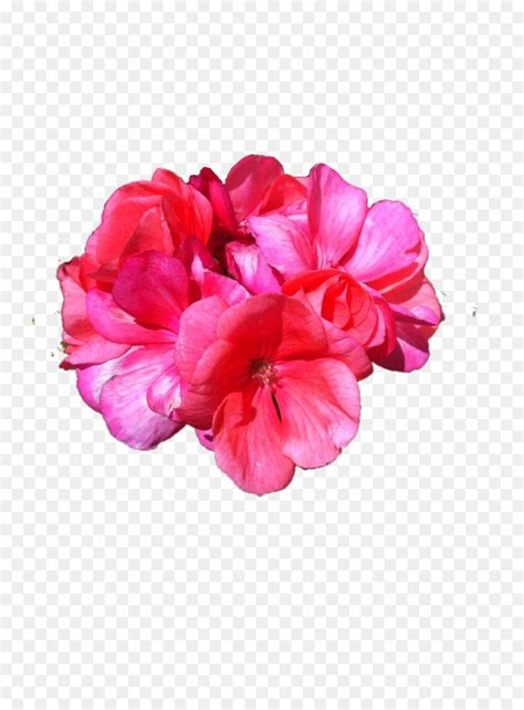 flower petal superimposition rose chinese flower chinese