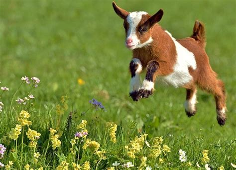 but fr canapé fleurs bébé ressort de chèvre doux fonds d 39 écran imac