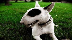 Crazy Looking Dog Breeds