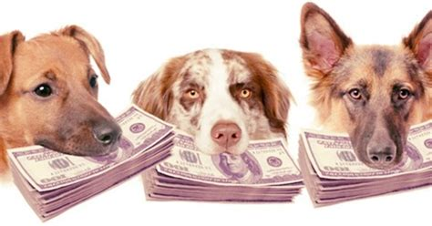 expensive dog breeds   world neat pets dogs