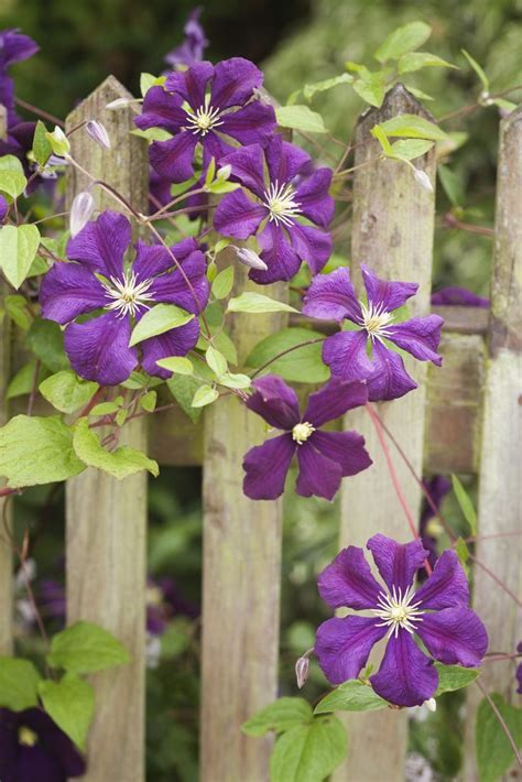 17 Best Images About Gardens And Gardening Tips On