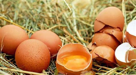 5 Cara Agar Tak Hamil Kulit Telur Ternyata Bisa Dimakan Manfaatnya Menakjubkan