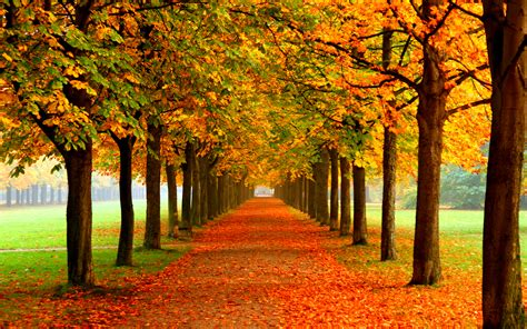 Autumn Wallpapers by Free Autumn Wallpaper 2560x1600 70487