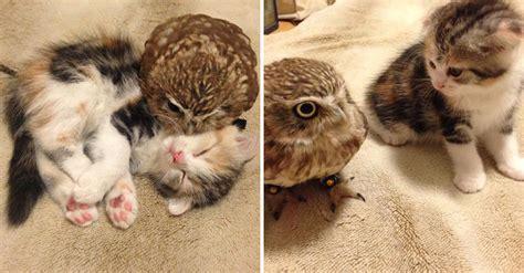 owlet  kitten meet   coffee shop    friends