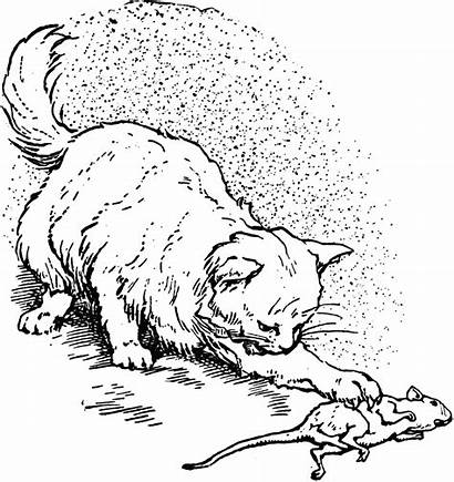 Mouse Cat Clipart Catches Drawing Eating Story