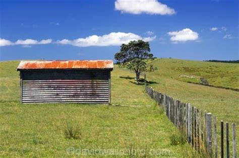 old farm shed fence and tree far north northland