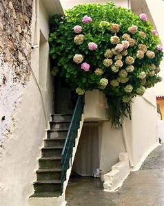 Blumen Für Den Balkon : balkon blumen f r eine sch ne au engestaltung ~ Lizthompson.info Haus und Dekorationen