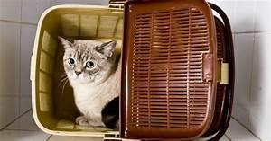 Comment Savoir Si Mon Ordinateur Est Surveillé : comment savoir si mon chat est stress les signes du stress qui doivent vous alerter ~ Medecine-chirurgie-esthetiques.com Avis de Voitures