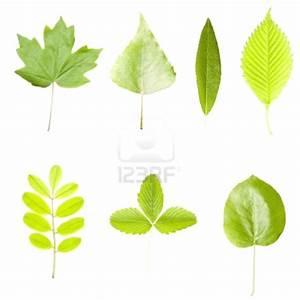 Feuilles D Automne à Imprimer : dessin arbre sans feuille a imprimer ~ Nature-et-papiers.com Idées de Décoration