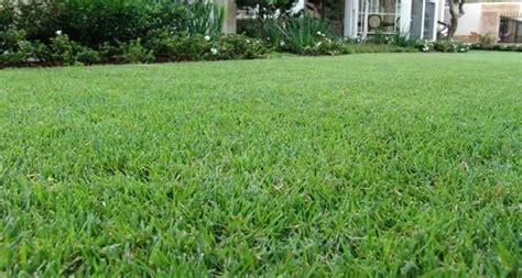 what type of grass is sod home empire turf