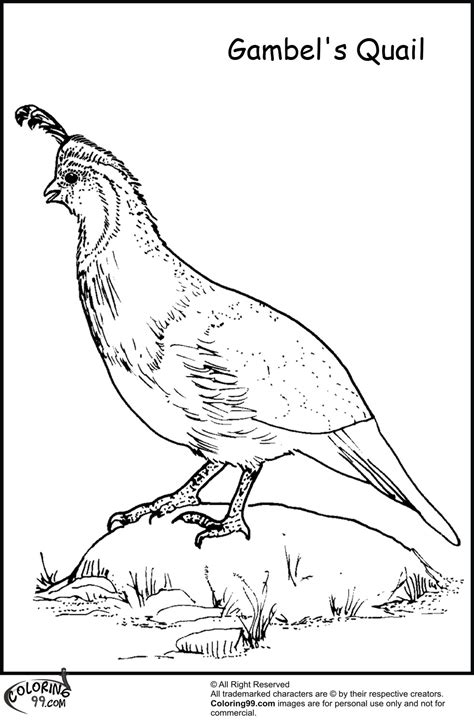 Coloring Quail by Quail Coloring Pages Team Colors