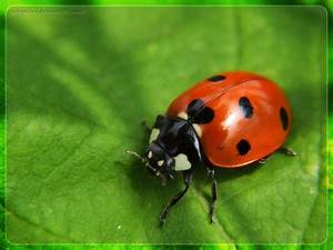 insects | Family information for children sports, camps ...