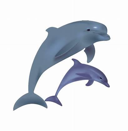 Dolphin Clipart Dolphins Bottlenose Cartoon Clip Transparent
