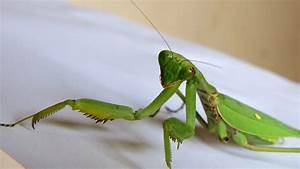 Big Green Grasshopper Insect Images | My Shoot Images Videos