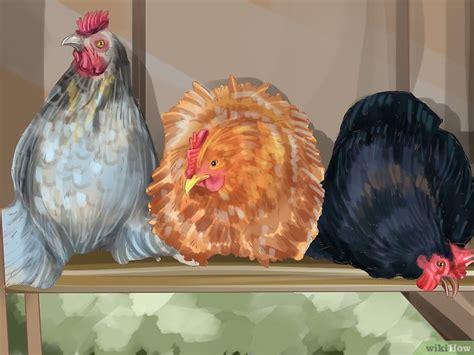 patchworkdecke nähen teil 3 como criar galinhas na cidade 15 passos imagens