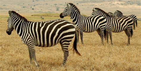 File:Tanzanian AnimalsWikimedia Commons