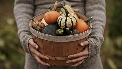Pumpkins Pie Carving Why Pilgrims Matters Different
