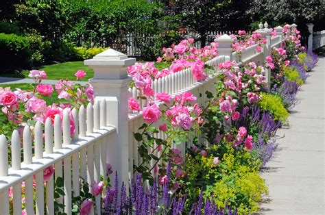 beautiful white fence landscaping ideas garden club