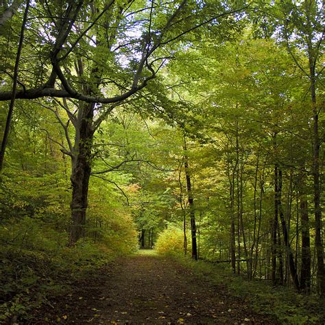 pathway lined by trees photograph by wilma birdwell