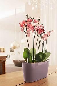 Orchideen Schneiden Video : orchideen pflege richtig d ngen schneiden gie en blog sina s welt kreativ nachhaltig ~ Frokenaadalensverden.com Haus und Dekorationen