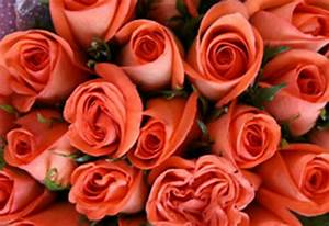 San Valentín: Noticias de San Valentín