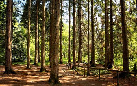 Imagem de Fundo - Caminho entre a floresta