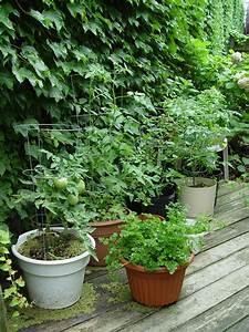 Pots à épices : veggie gardening without the garden garden housecalls ~ Teatrodelosmanantiales.com Idées de Décoration